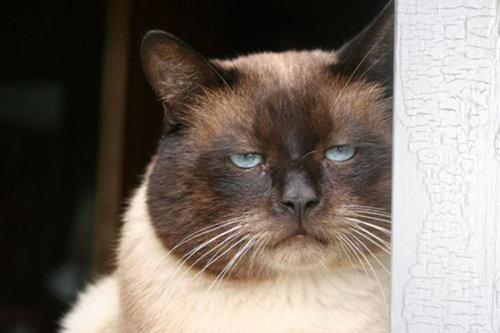 なんだかとても不機嫌な猫たちの写真