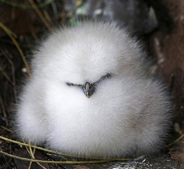 ふわふわで思わず「もふもふ」したくなる可愛い動物
