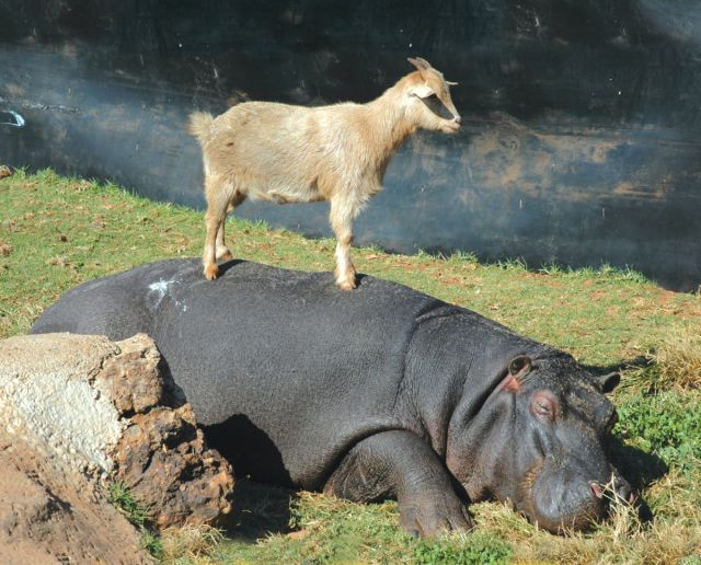 とても仲良しな動物たちの写真