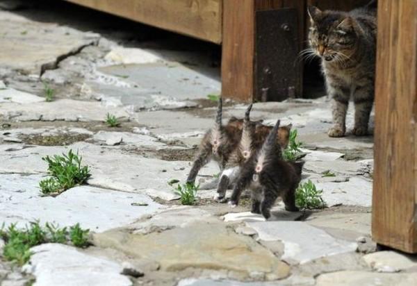 心も癒される動物の写真