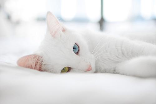 本当に可愛すぎる猫の画像