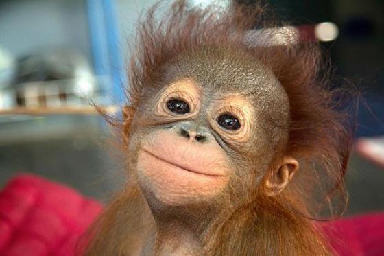 幸せそうに笑いすぎ!ニッコリ笑顔の動物たちの写真