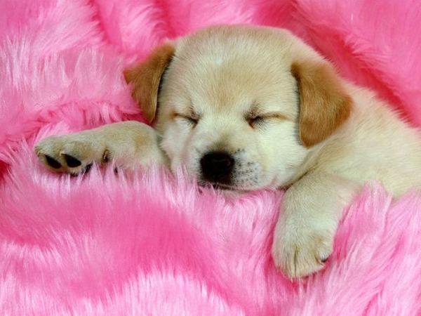 子犬の写真が本当に可愛すぎてワロタwww写真