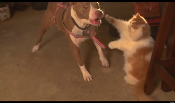 本当は仲良し?犬と猫が喧嘩している写真