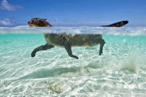癒される可愛い動物たちの写真