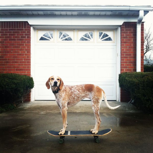 バランス感覚が凄い犬