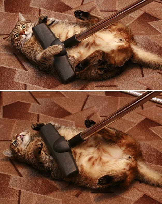 とにかく魅力的な猫の写真