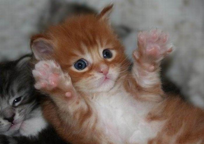 可愛すぎる動物の赤ちゃんの写真