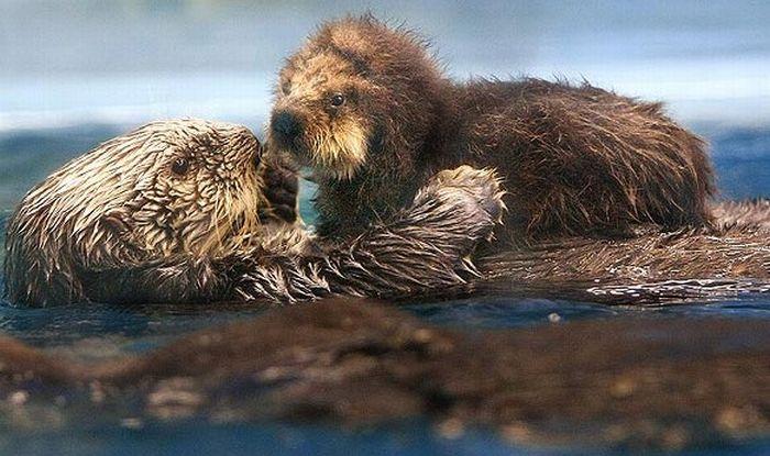 本当に可愛らしい動物の写真