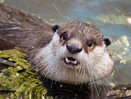 ポカーンとした表情の動物の画像
