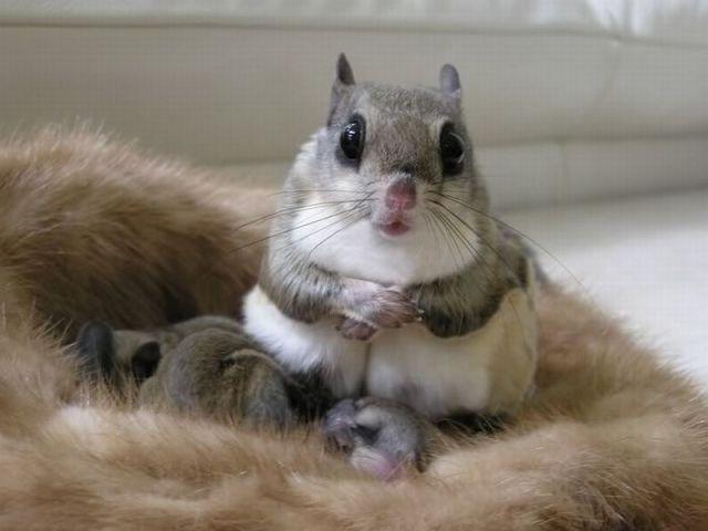 たまらないほど可愛い動物の写真