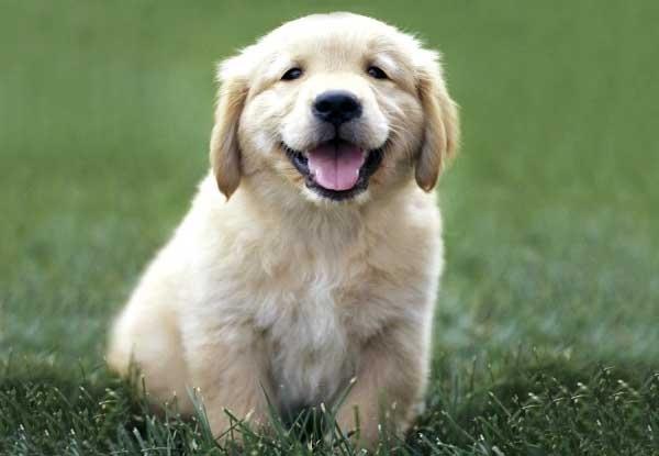 幸せそうな犬の笑顔 オモシロ画像の集積