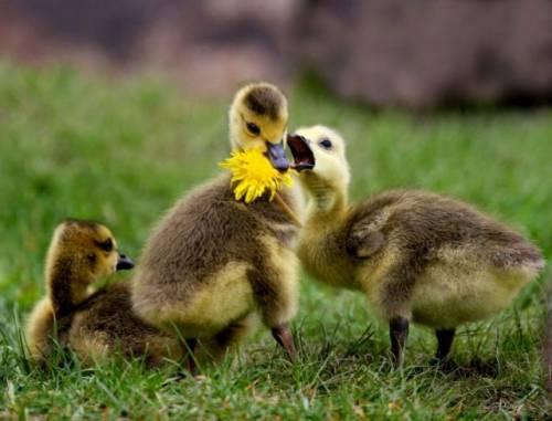 動物たちの可愛い画像