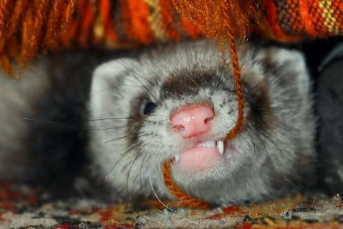 元気になれる動物の画像