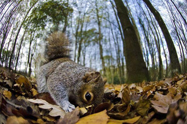 可愛い動物たちの画像が集まった写真
