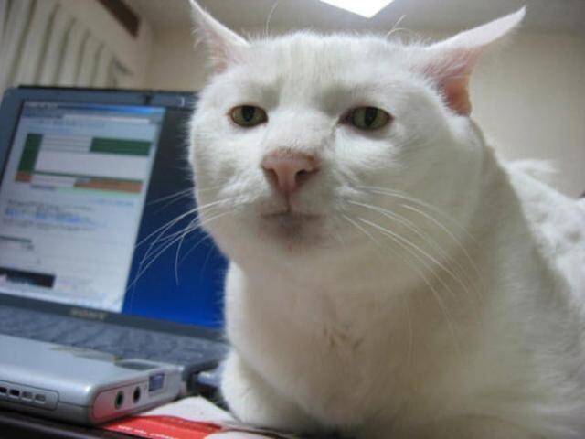 悲しい顔をした猫たちの写真