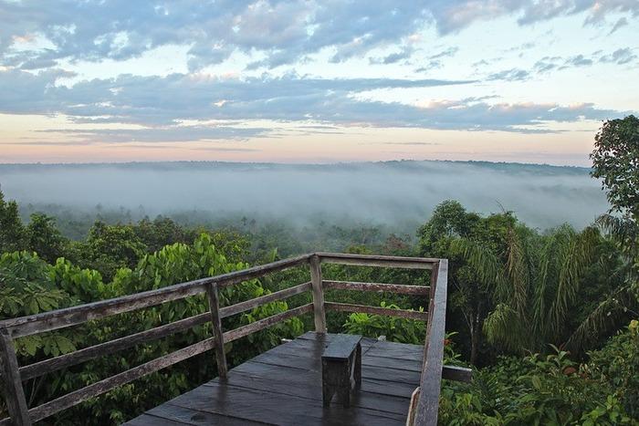 アマゾンのジャングル画像