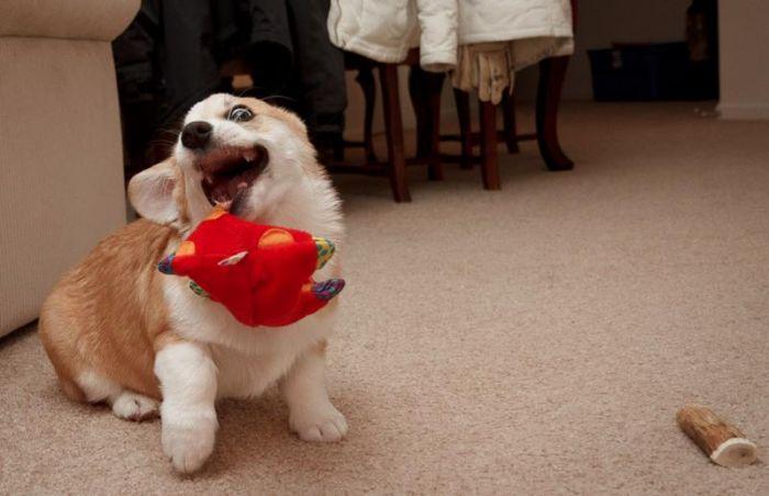 変顔や変な格好した犬の写真