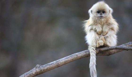 思わず微笑んでしまう可愛い動物達の写真