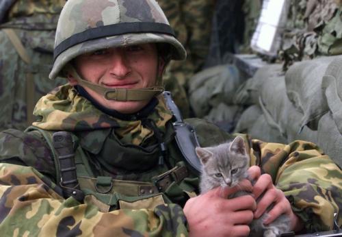「戦争と猫」の画像