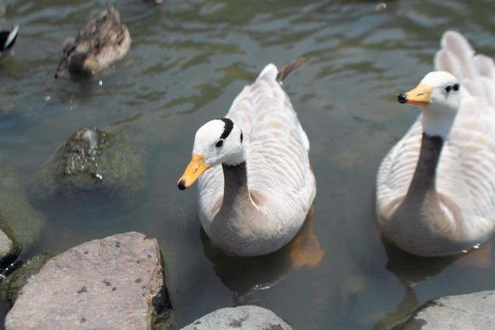 沢山の可愛い鳥たちの写真