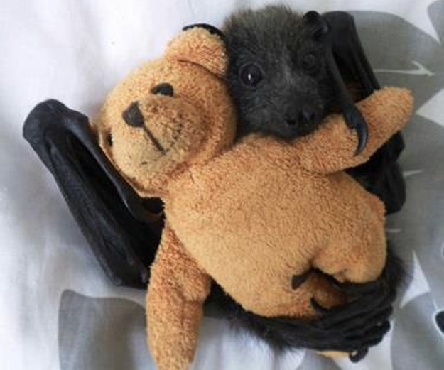 実は可愛い「コウモリ」の写真18枚