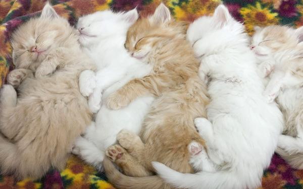 猫が寝ている姿が本当に可愛らしい写真