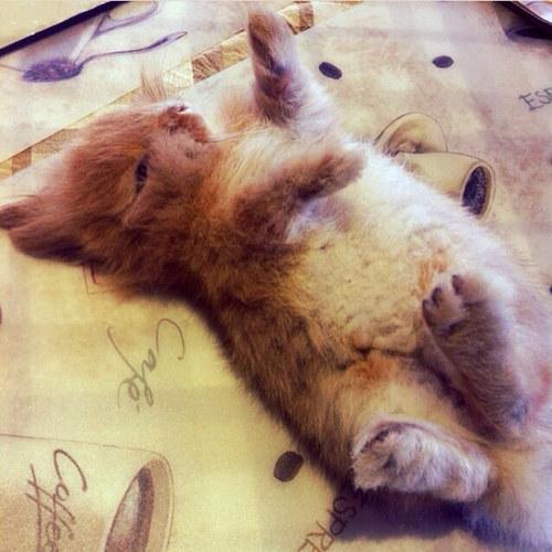 寝るウサギの可愛すぎる写真