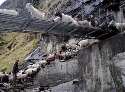 世界にある「吊り橋」