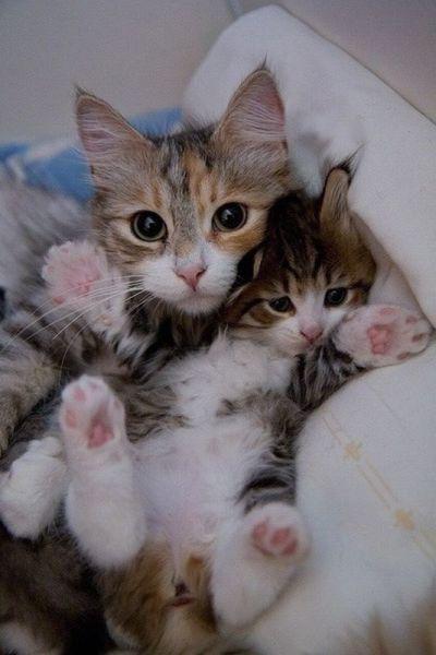 癒しの可愛い動物の画像