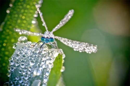 キラキラと輝くトンボの写真