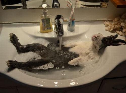 「最高に気持ちがいい!」という表情をした動物たちの写真