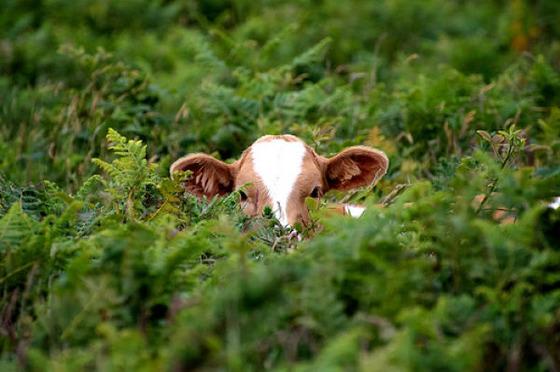 動物に影からじーっと観察されている写真