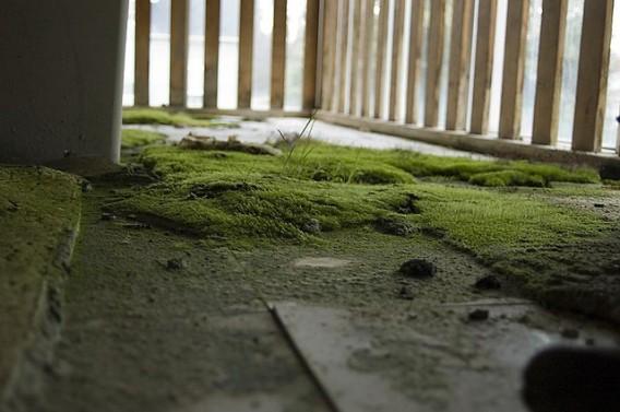 人が去り、緑色のカーペットを手に入れた苔むした廃墟の写真