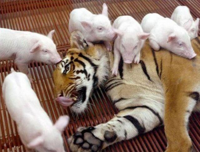 ちょっと可愛すぎる動物たちの写真