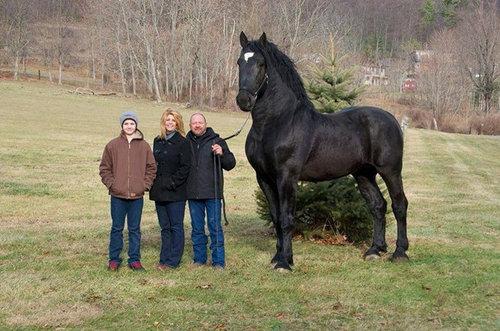 本当に驚くほど巨大すぎる動物たちの写真