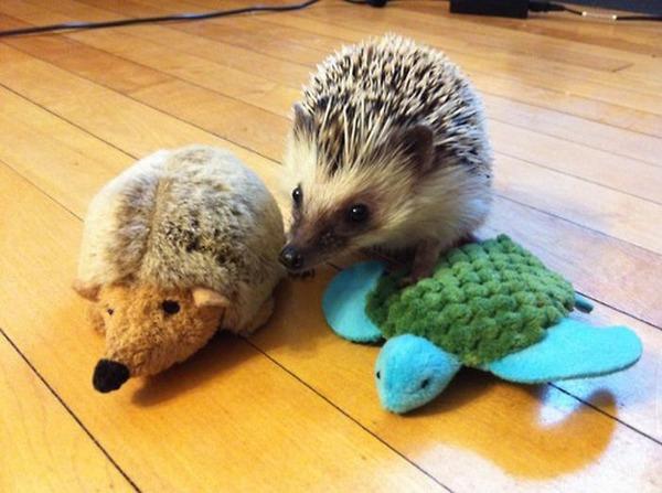 可愛いぬいぐるみと遊ぶ動物たちの写真
