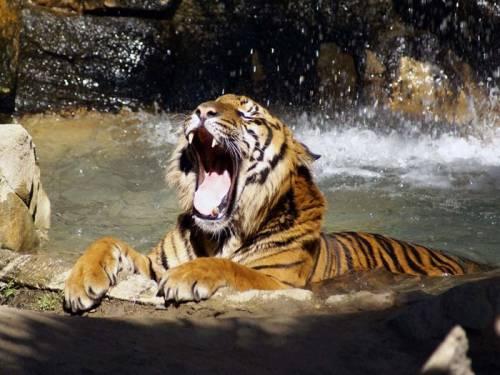 動物たちの可愛いあくび