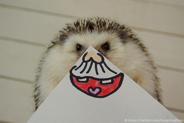 表情豊富なハリネズミの「まるたろうさん」の写真