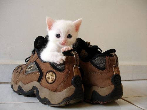 子猫の可愛い赤ちゃん