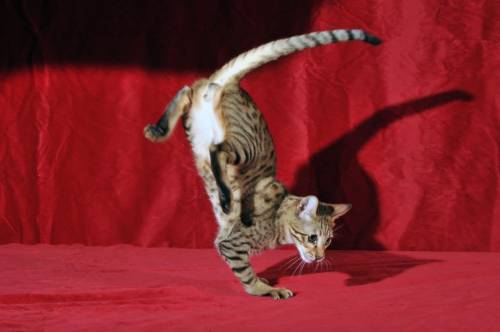 猫が逆立ちしているようにしか見えない写真