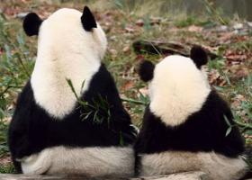 あまりにも似ている動物の親子たちの写真