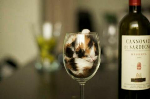 猫が液体化している可愛い写真