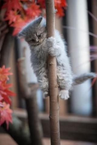 なんで動物ってこんなに可愛いんだろと思える写真