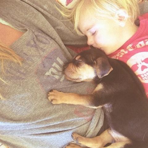 幼い子犬と幼い息子の友情の記録写真