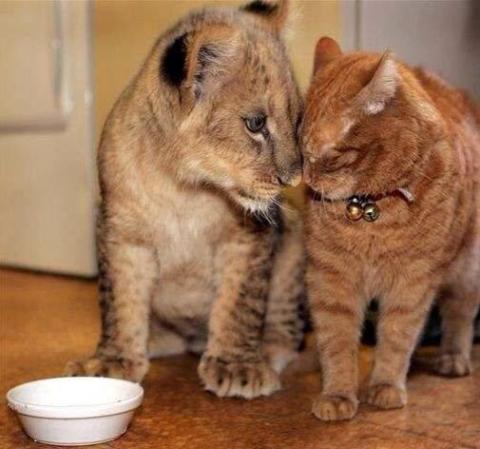 異種動物たちが仲良くしている写真