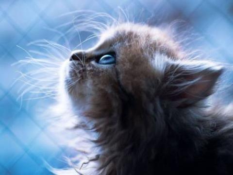 可愛い動物画像