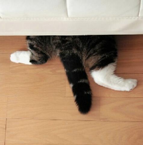 猫のかくれんぼ