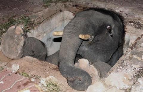 これは大変!人間の助けが必要そうな動物たちの写真