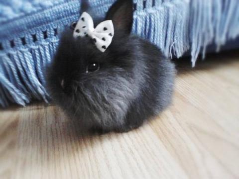 本当に可愛すぎるウサギさんの写真